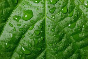 gotas de agua en la planta