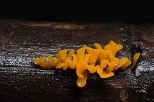 primer plano de setas naranjas