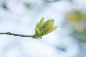 Soft photo of green leaves