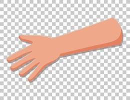 brazo con dedos aislados vector