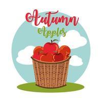 manzanas de otoño en cesta de mimbre vector