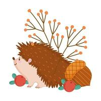 autumn hedgehog acorn berries banches isolated design white background vector