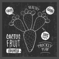 Cactus Fruit line art drawing on the chalkboard vector