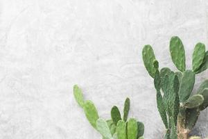 green leaves of Cactus plant on white wall background