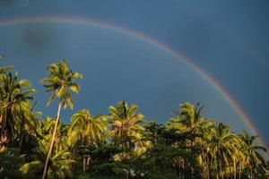 arcoiris palmeras tropicales.
