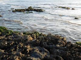 Algae on rocks on the coast photo