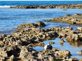 pozas de marea azul durante el día foto