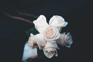 Peach roses in a dark room photo
