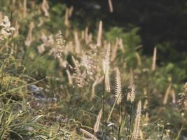 hierba salvaje en el sol