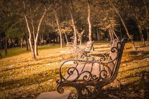 Empty benches in a park photo