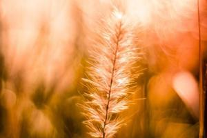 Close-up of a field at golden hour photo