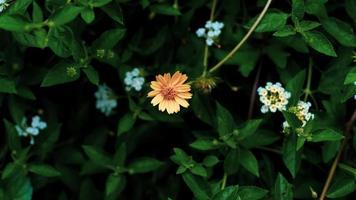 Fondo de hojas verdes con pequeña flor amarilla foto