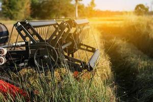 Harvester harvesting rice