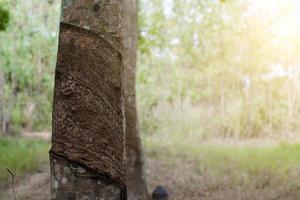 tronco de árbol y luz del sol