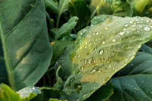 gotas de lluvia sobre una hoja verde foto