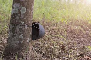 Helmet on a tree trunk