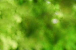 desenfoque de hojas verdes de los árboles para el fondo foto