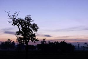 Silhouettes of trees at dusk photo