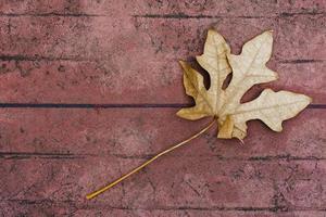hojas secas en piso de cemento