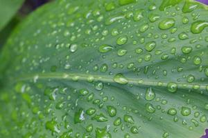 Water on a leaf photo