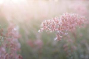 Pink flowers with soft light