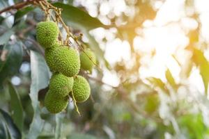 Lychee at golden hour photo