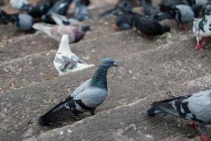 palomas en las escaleras