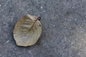 hoja seca con fondo de cemento.