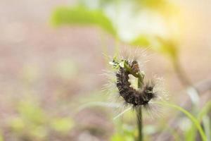 gusano comiendo planta verde con luz suave.
