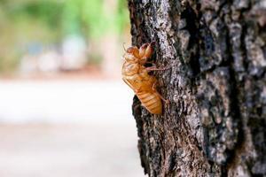 Cicada shell outside photo