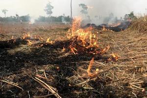 Dry grass field on fire photo