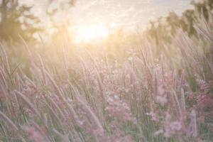 Wild grass during golden hour photo