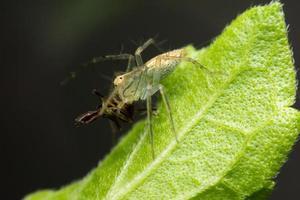 Brown spider walking on the leaf