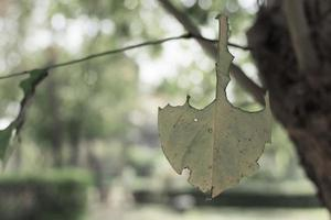 Leaf on a clothes line