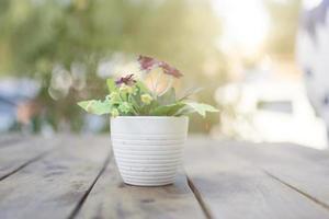 planta en maceta en una mesa foto