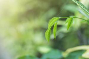 hojas verdes con espacio de copia