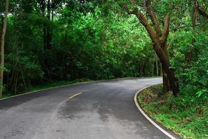 camino a través de un frondoso bosque foto