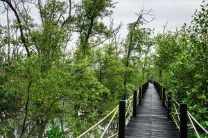 pasarela en el bosque de manglar