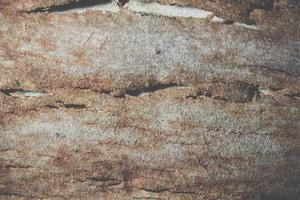 Background of bark surface