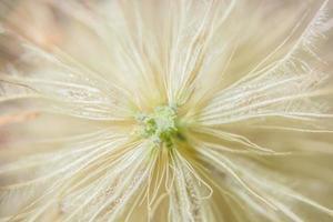 fondo macro de flores silvestres