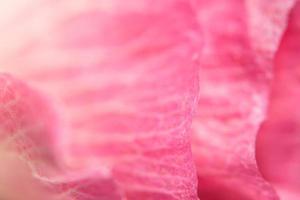 fondo floral rosa