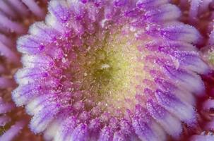 Purple flower background photo