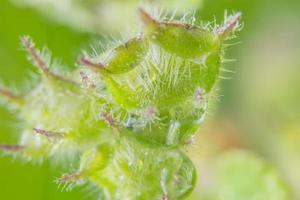 Wildflower macro background