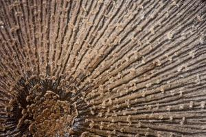 macro de superficie de hongo