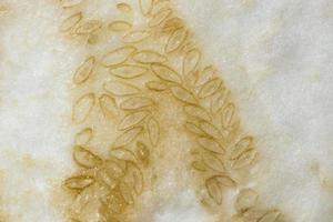 Vegetable seeds background