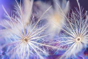 Flower close-up background
