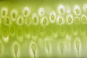 Cucumber seed pattern