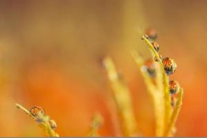 Background with water drops on orange flower petals