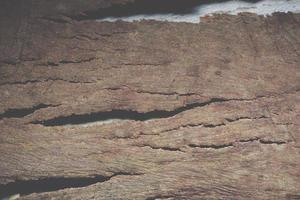 fondo de la superficie de la corteza foto