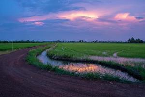 puesta de sol sobre el campo de arroz